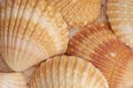Seashells & Starfish